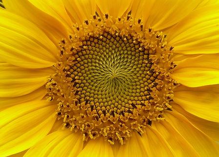 flower-625_1920.jpg