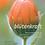 Thumbnail: blütenkraft - Botschaften (Begleitbuch)