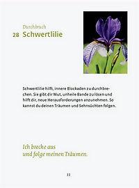 Beschreibung Schwertlilie - Durchbruch - Beispielseite blütenkraft-Broschüre