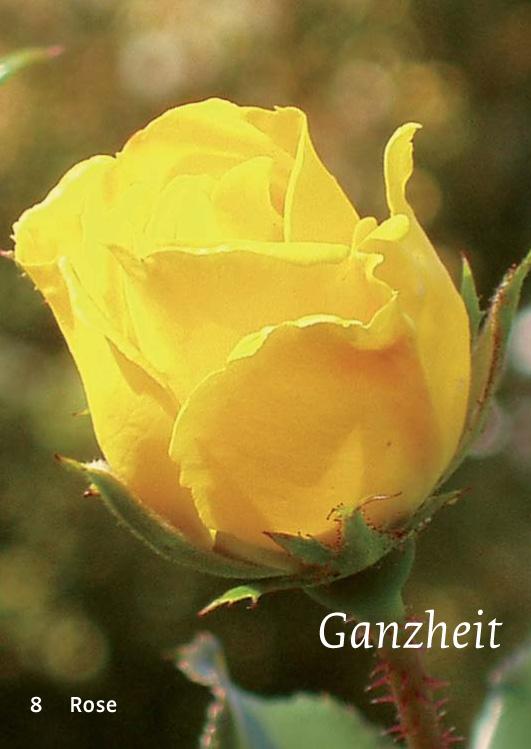 8 Rose - Ganzheit
