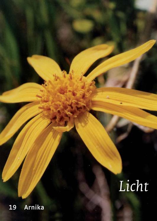 19 Arnika - Licht