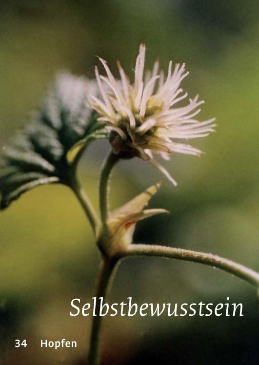 34 Hopfen - Selbstbewusstsein