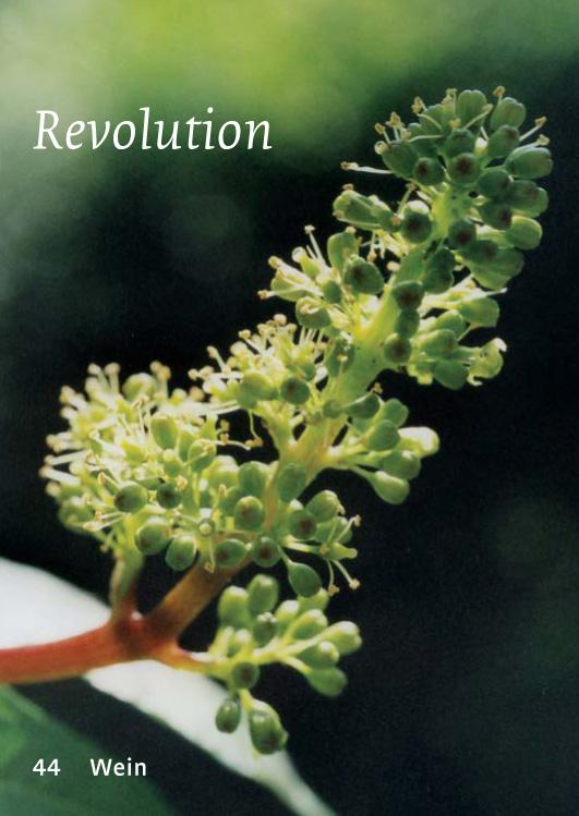 44 Wein - Revolution