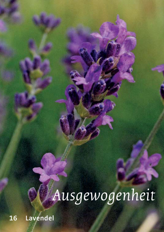16 Lavendel - Ausgewogenheit