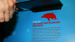 streetwide_winter_dolphin_clearwater_aqu