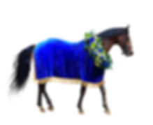 horse racing, winner horse in wreath and