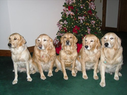 Christmas_Picture_with_Daisy_Buffy_HayLe