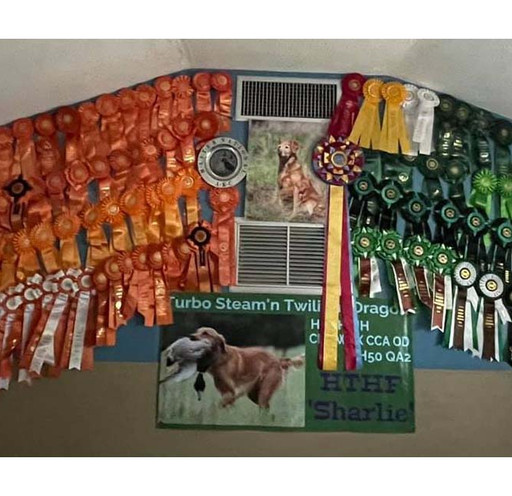 So, when you have a dog like Sharlie, her accolades deserve to be displayed.