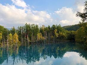 北海道旅行:富良野の抜群の景色とか