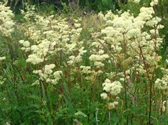 Herbal Asprin Salve