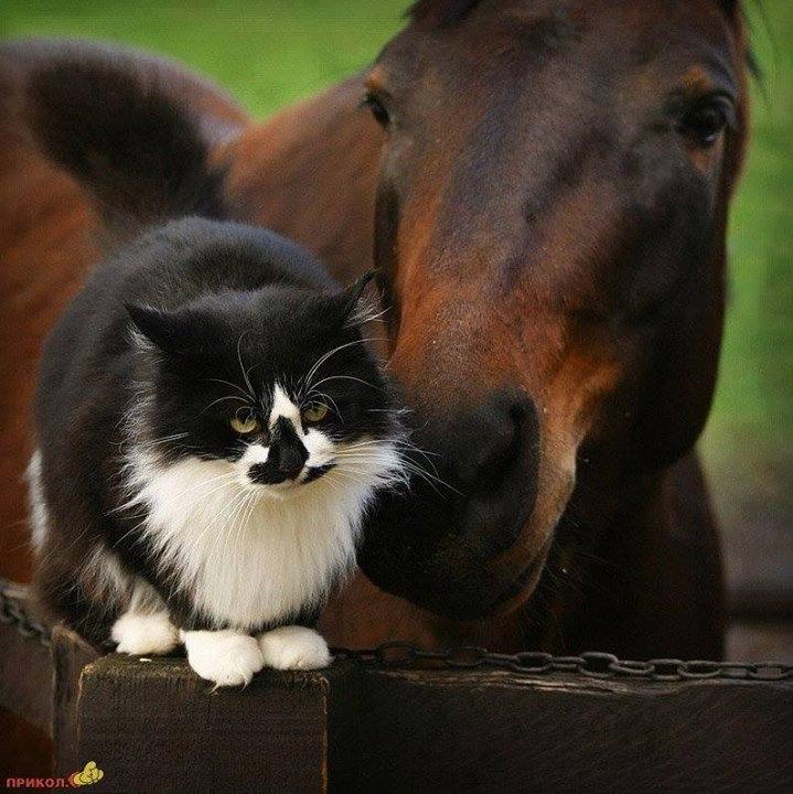 HorseCatPhoto.jpg