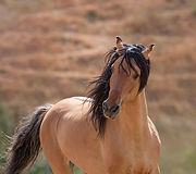 Spirit_HorsePhoto.jpg