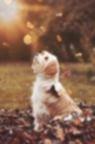Herbst Hund