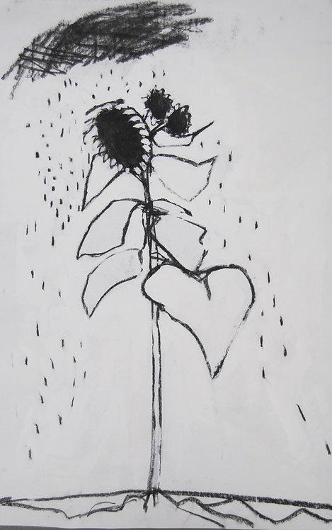 Lizbeth Holstein, Sunflower under a cloud