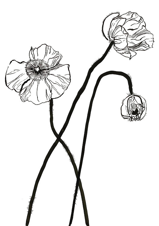 Lucy Wayne, Strong poppies 1