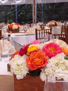 backyard-wedding.JPG