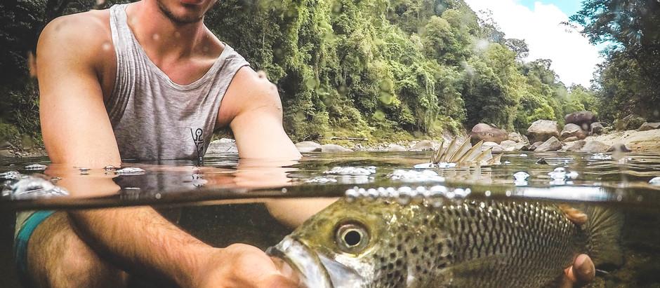 A Proper Jungle Perch Adventure