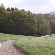 Crumble's morning walk