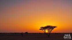 P2231850alashi-surly-africa