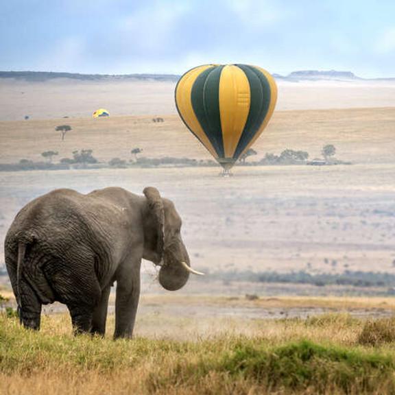 Safari Wellness Retreat - KENYA