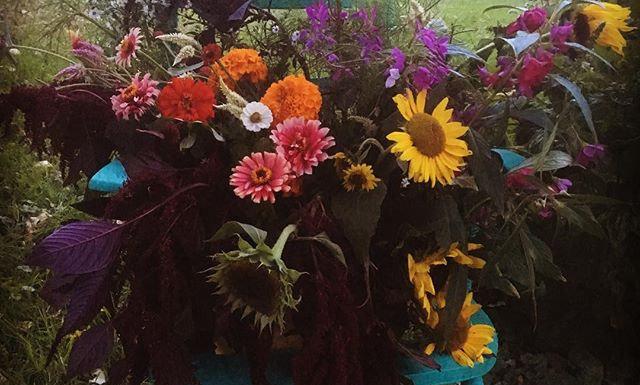 Flower Subscription (6 pick ups)