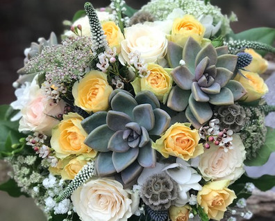 Yellows & succulents