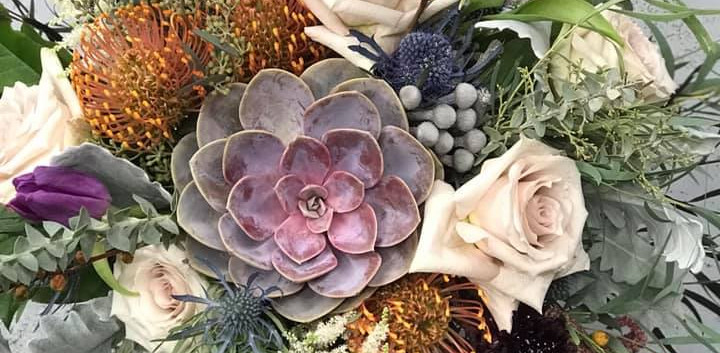 Succulents and protea