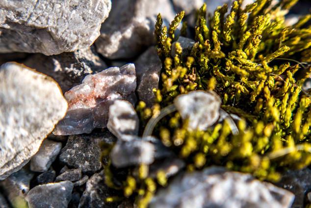 Stone ans grass