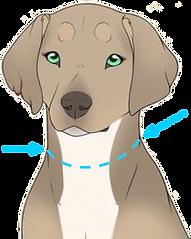 perro cara2.png