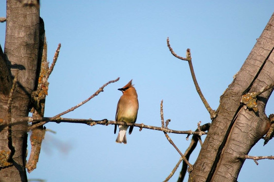 bird watching riding mountain national park