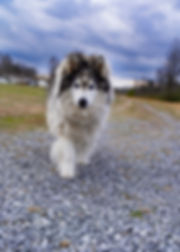 Juneau gravel drive Image 1FS.jpg