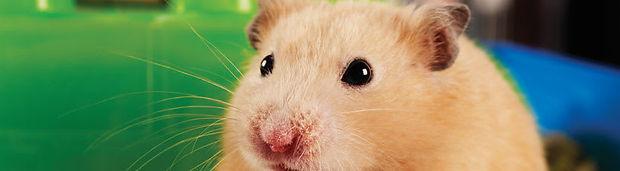 res-hamster-1-060517-hero-810w-223h-d.jp