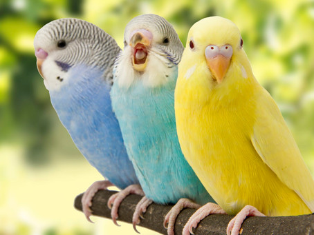 15 Amazing Facts About 15 Birds