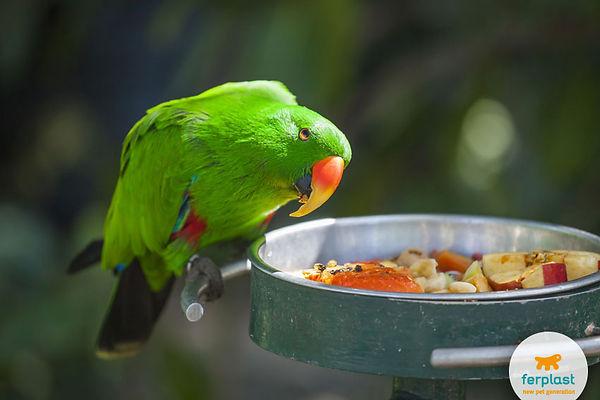 parrot-hesitant-food-feeder-diet (1).jpg