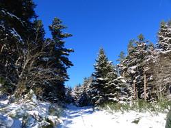 Une promenade dans la forêt