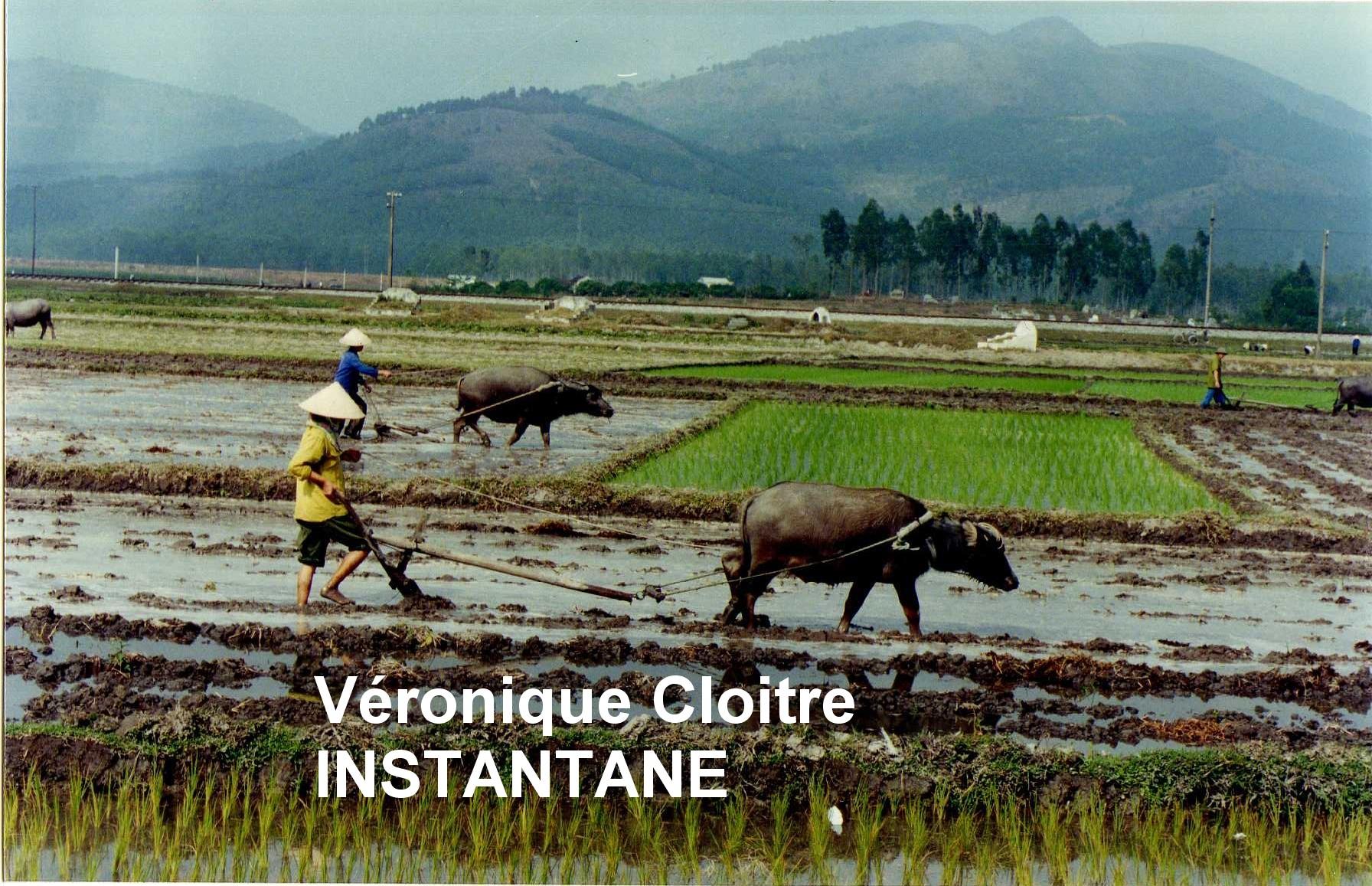 Vietnam (11).jpg