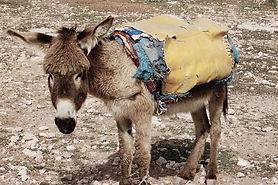donkey_edited_edited.jpg
