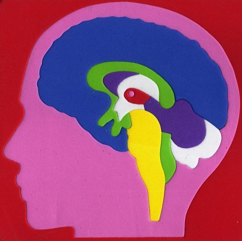 Encephalon-Brain-Blank