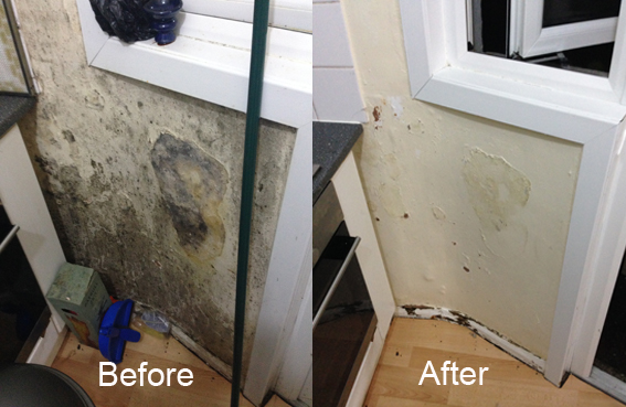 Mould removal in Leyton