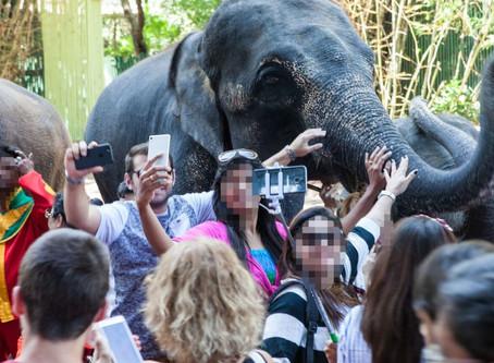Cuando las selfies ponen en peligro la fauna