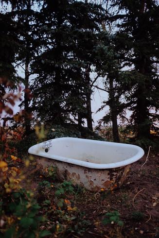 Picture perfect garden in Alberta, CA.