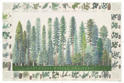 31742_GN_Conifers_Poster_LG