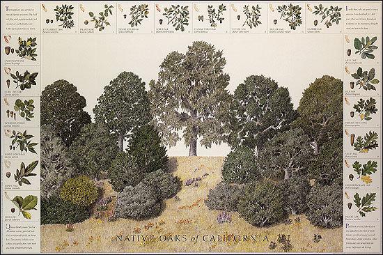 Native Oaks of California