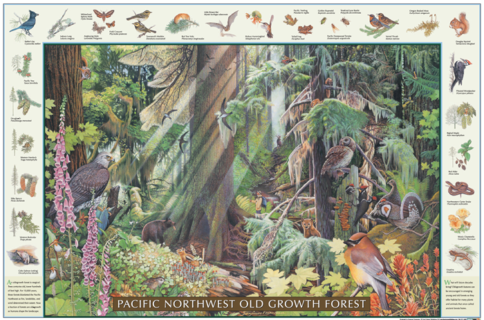 Pacific NW Old Growth Forest