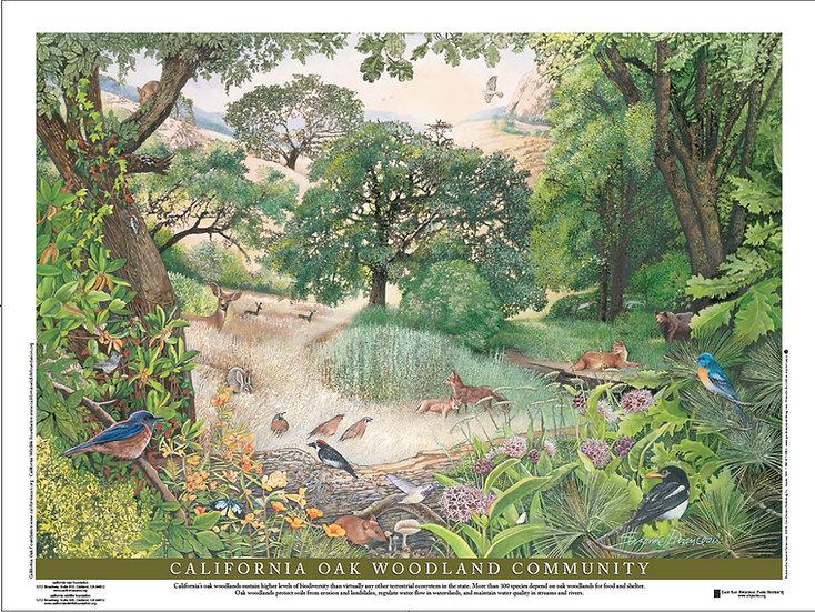 California Oak Woodland Community Poster