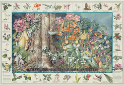 Norhtwest Woodland Wildflowers-2