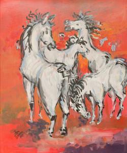 Weissen Pferde der Camarque