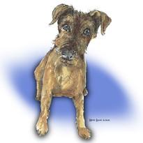 Brown terrier drawing by Karen Little  of Sketch-Views
