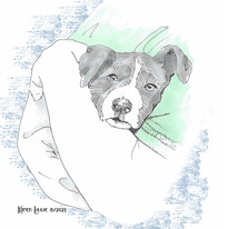 Archie, a big, black and white dog by Karen Little  of Sketch-Views