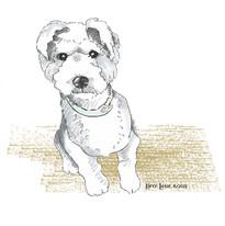Terrier puppy drawing by Karen Little  of Sketch-Views